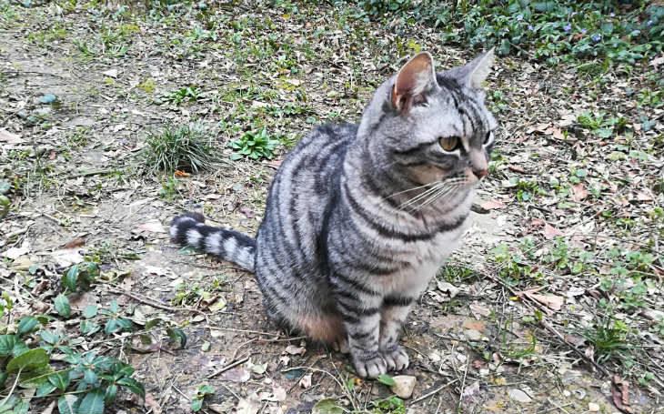 Firmato l'accordo per un anno, venti posti nell'oasi felina di Medicina riservati ai gatti di Castel Guelfo