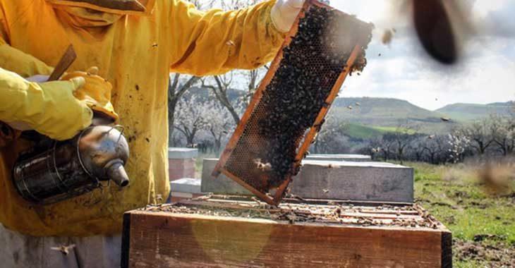 Peste americana in un alveare di api a Imola, ordinanza per l'abbattimento