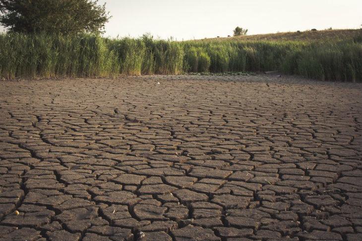 Siccità e caldo record dell'inverno 2019, come il Consorzio di bonifica fa fronte all'emergenza agricola