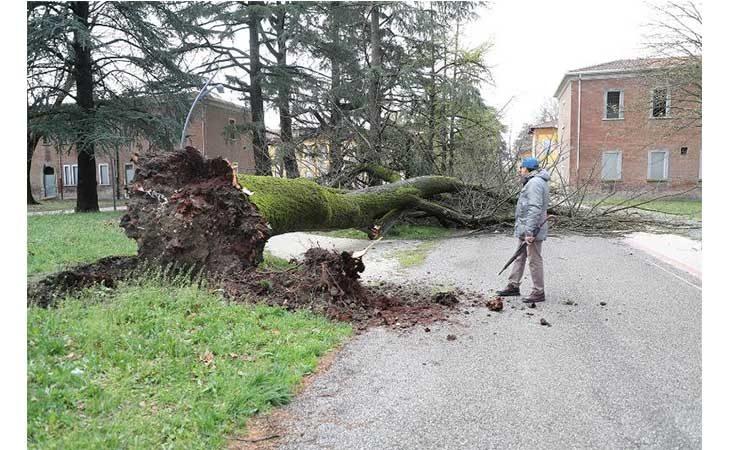 Alberi caduti nella notte a causa del forte vento. In Valsellustra colpita un'auto