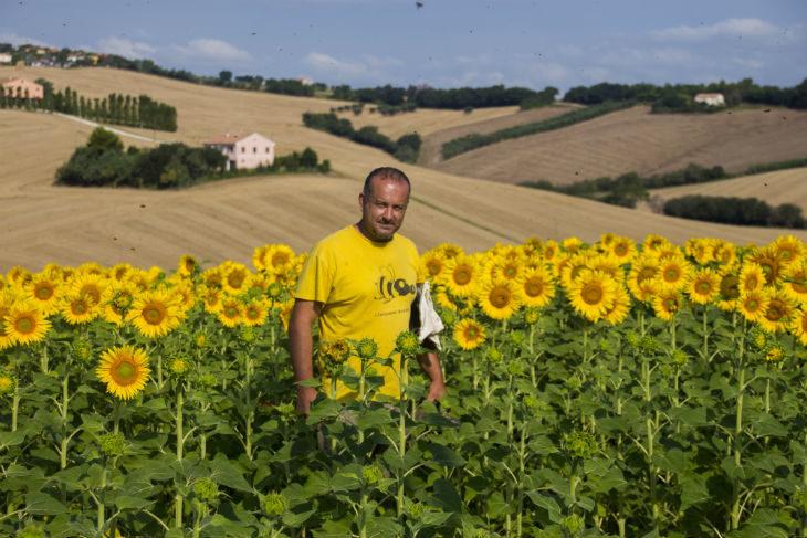 """Castel Guelfo, Castel San Pietro e Ozzano aderiscono al progetto """"Verde urbano' in difesa delle api. Assente Imola"""