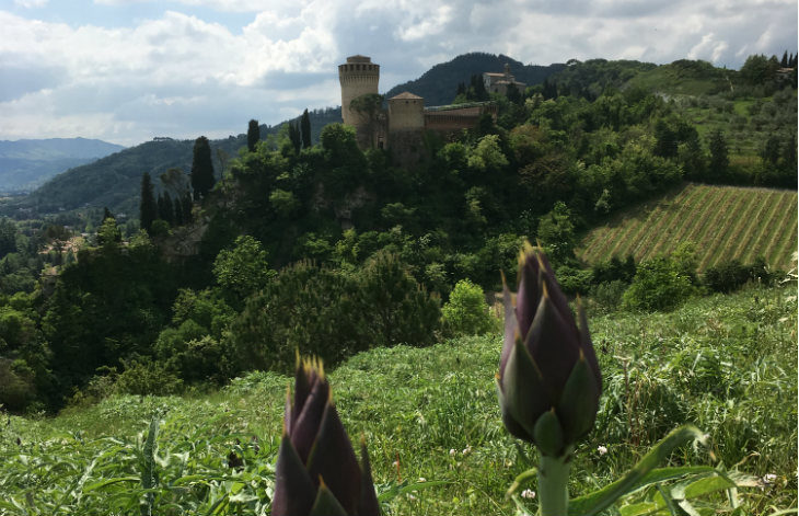 I segreti del Carciofo Moretto di Brisighella, prodotto di stagione che cresce bene tra i calanchi esposti al sole