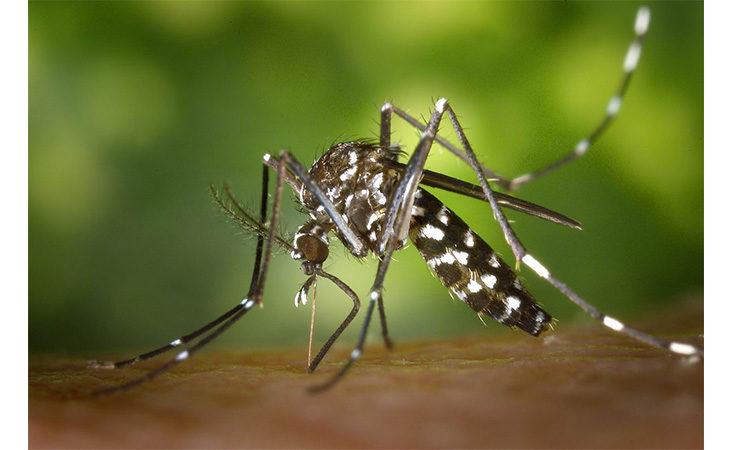 Prevenzione zanzare, gli incontri nei centri sociali a Imola