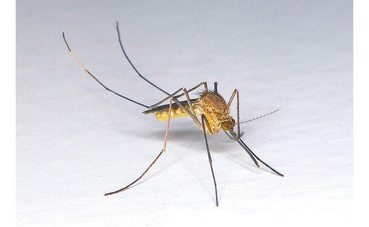 Prevenzione zanzare, kit gratuiti nel Circondario e Ozzano ma non a Imola