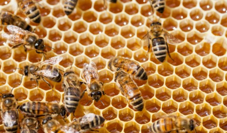Clima pazzo, l'allarme della Coldiretti regionale: «A rischio tutta la produzione di miele del 2019».