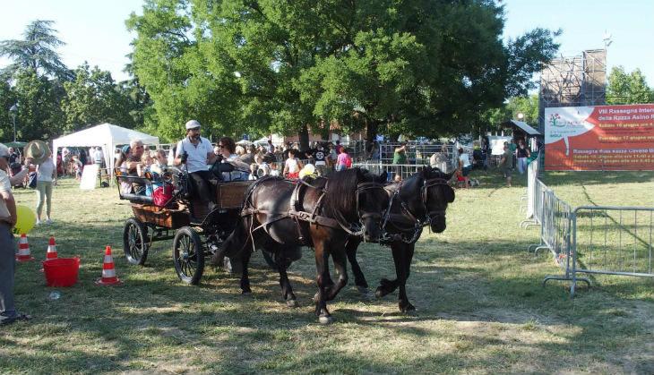 Da venerdì 14 giugno a Imola la Fiera agricola del Santerno con la Mostra nazionale del cavallo agricolo italiano
