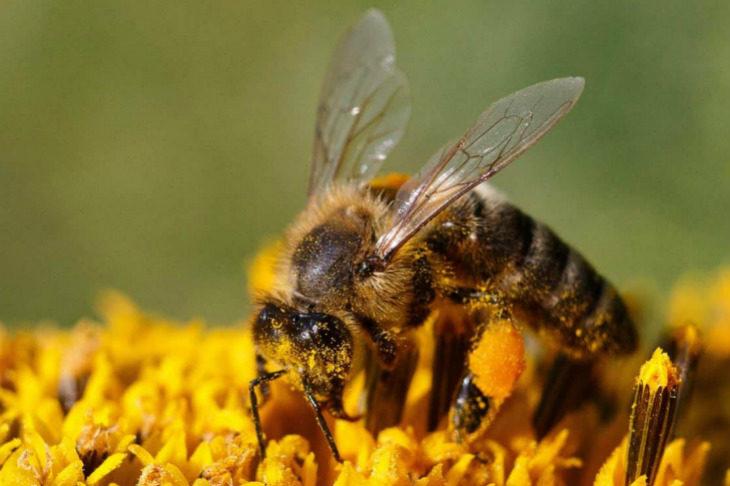Stasera il minicorso in piazza Acquaderni dal titolo «Giardino e verde per salvare le api»
