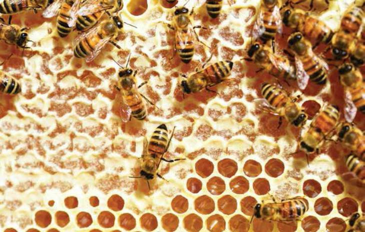 """Il 2019 """"annus horribilis' per il miele, crollo della produzione a causa del maltempo di maggio"""