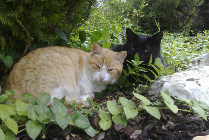 """Oggi è la """"Giornata internazionale del gatto', conosciamo meglio il più amato dei felini sfatando qualche luogo comune"""