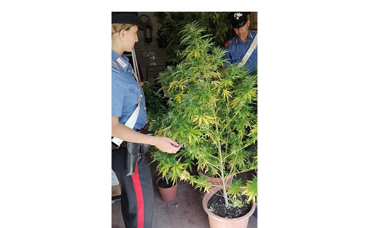 Aveva in casa dodici piante di cannabis e bilancini di precisione, arrestato 37enne