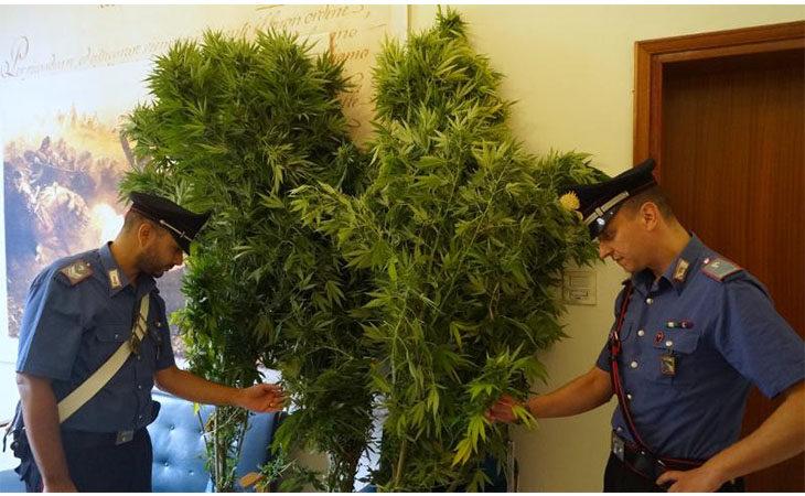 Trovati con piante di cannabis, marijuana e un proiettile in casa. Due coniugi denunciati