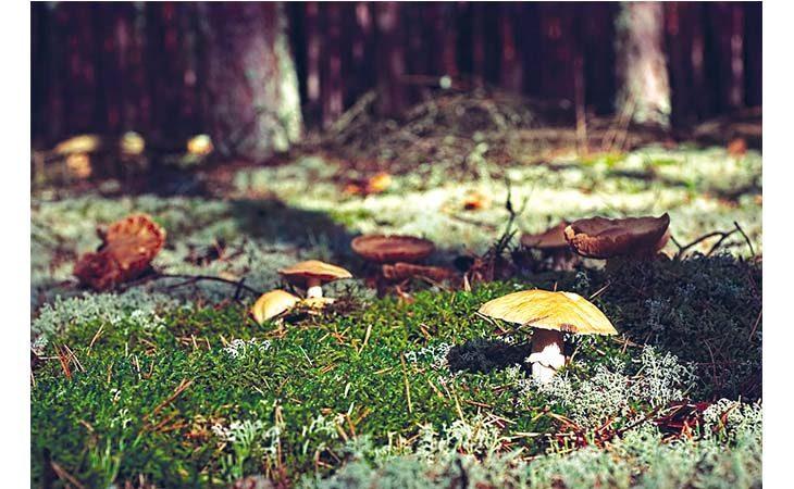 Non tutti i funghi sono commestibili, a Imola ha riaperto l'Ispettorato micologico