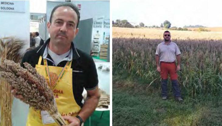 Prende piede la coltivazione del sorgo, cereale tra i più diffusi al mondo e importante per il futuro