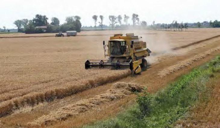 Agricoltura Emilia Romagna, anche la coltivazione del grano duro penalizzata dall'andamento climatico