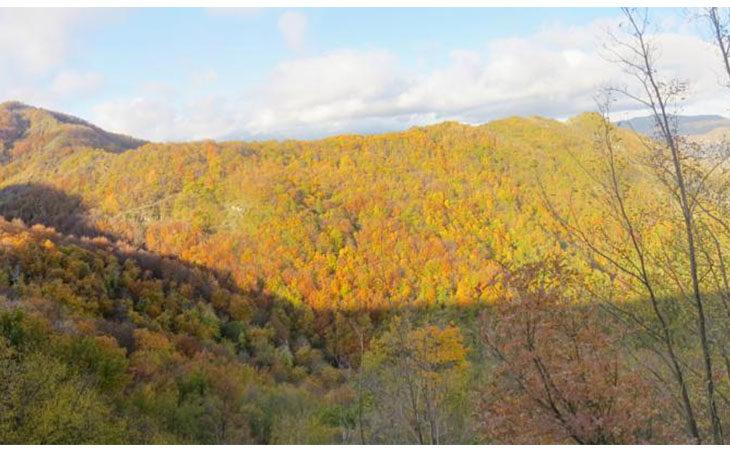 «Selva di Quedina» col Cai, scarpinata da Moraduccio fino al castagneto secolare