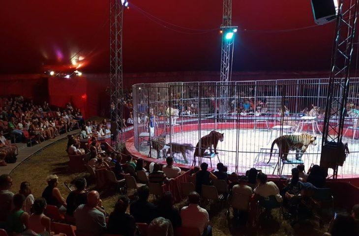 Circo di Vienna a Medicina. Cittadini preoccupati per gli animali, il Comune rassicura