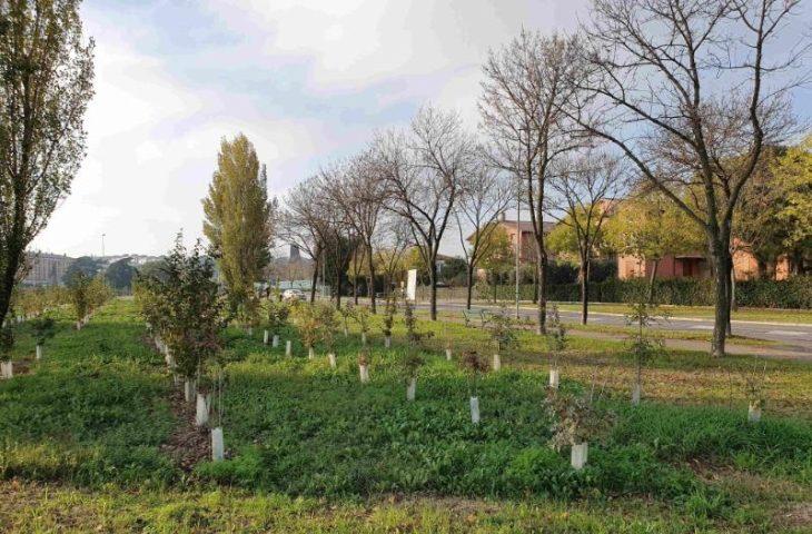 Imola fa scuola in Italia coi suoi «boschi in città»