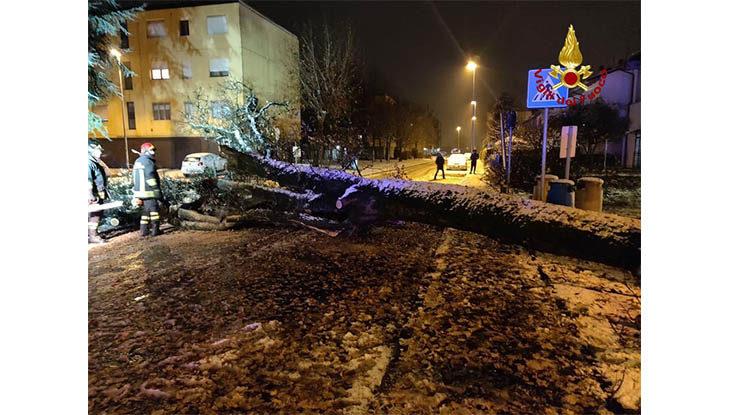 Maltempo, neve da Imola ad Ozzano. A Medicina crolla un albero, camion incastrato tra le case a Giugnola