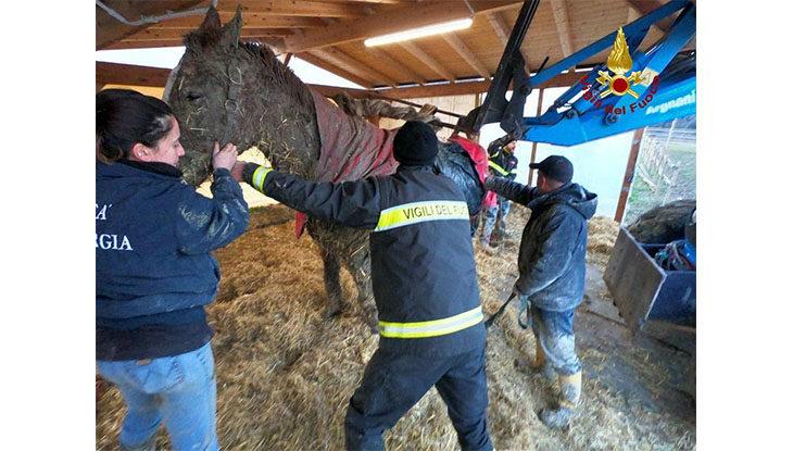 Cavallo rimane impantanato nel fango, salvato dai vigili del fuoco