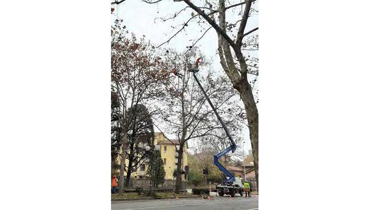 A Castello interventi in tree-climbing per potare gli alberi
