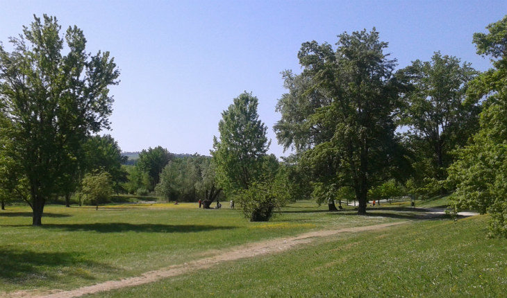Oltre 50 alberi saranno piantati nel Parco Lungo Sillaro, un posto anche per le piante che ornavano la piazza a Natale