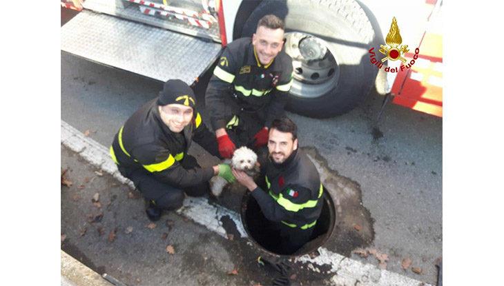 Cane intrappolato nelle fogne liberato dai vigili del fuoco