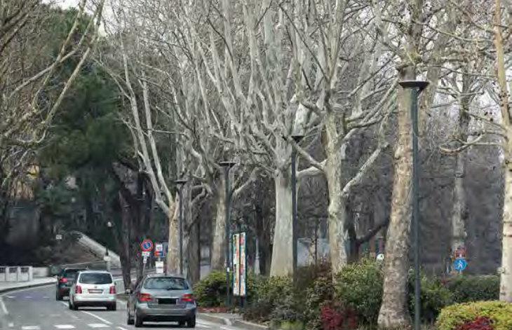In corso il censimento degli alberi a Castel San Pietro, un cartellino per geolocalizzarli tutti