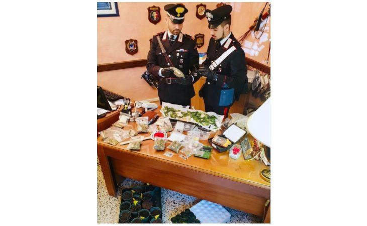 Coltiva e confeziona la marijuana in un fienile, arrestato 57enne di Castel del Rio