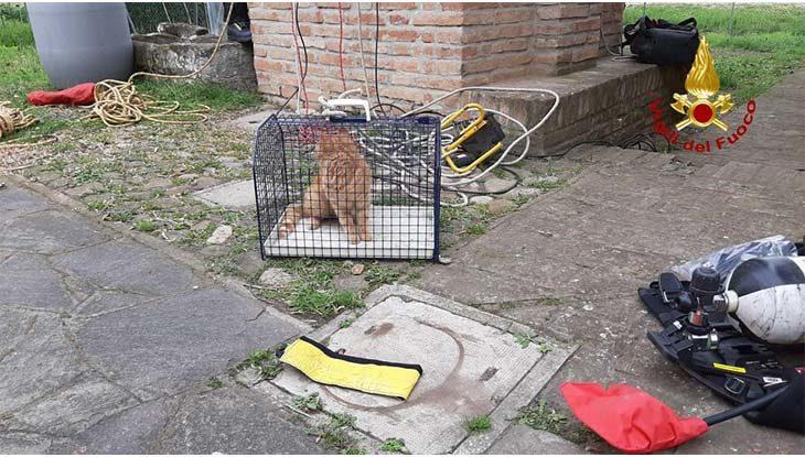 Gatto cade in un pozzo profondo 8 metri, vigile del fuoco si cala e lo salva