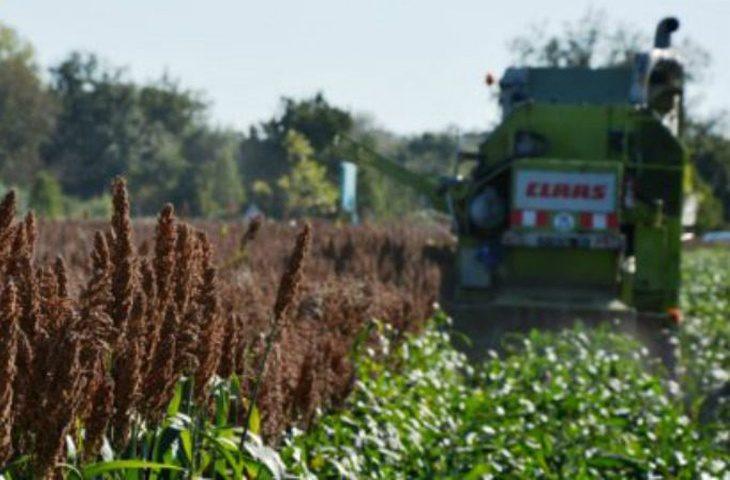 Siccità e temperature alte mettono in crisi le colture