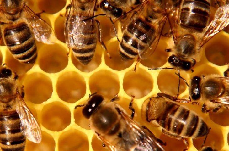 Fioriture fuori stagione ed eventi estremi fanno diminuire la produzione di miele