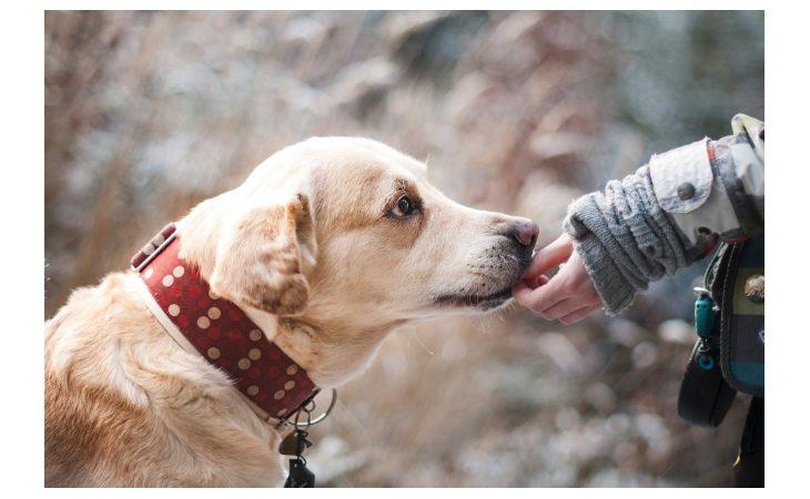 Coronavirus, attenti alle fake news: per igienizzare le zampe dei cani usate solo acqua e sapone