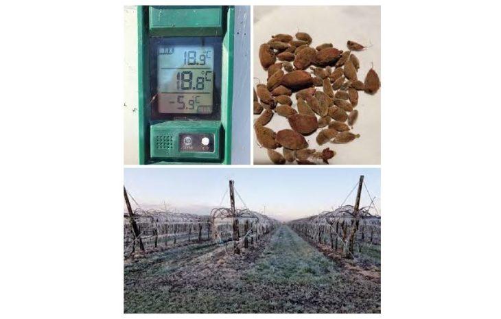 Le temperature sottozero del 24 e 25 marzo mettono in ginocchio l'agricoltura del territorio