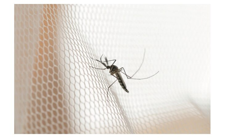 Anche il Comune di Medicina attivo nella lotta per le zanzare