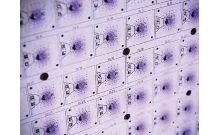 Tante richieste all'azienda imolese C-Led del gruppo Cefla per i Led ultravioletti che distruggono virus e batteri