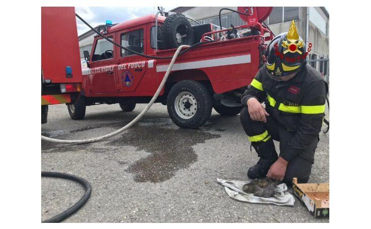 Sterpaglie in fiamme nella zona artigianale, vigili del fuoco salvano anche tre gattini