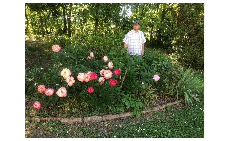 Guido Laffi dell'associazione «Nel giardino, nella natura» aiuta a muoversi nel mondo del verde