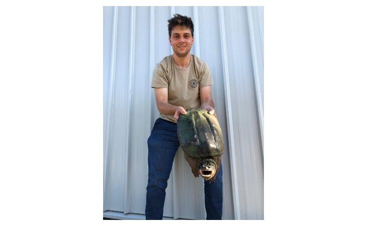 Tartaruga azzannatrice recuperata a Codrignano, ora è allo Zoo Safari di Ravenna