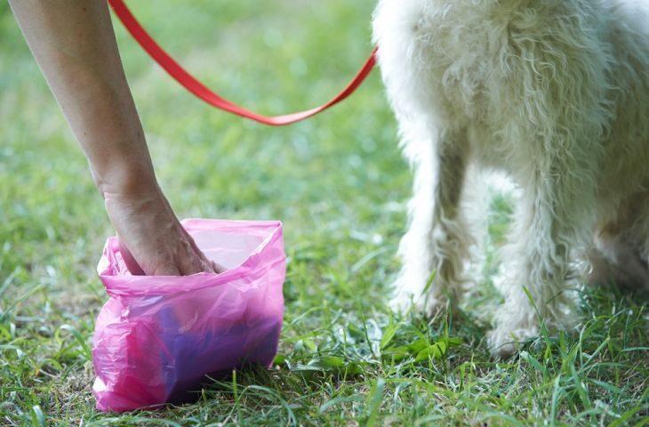 Deiezioni di cani e abbandono di rifiuti, l'appello al decoro della Polizia locale