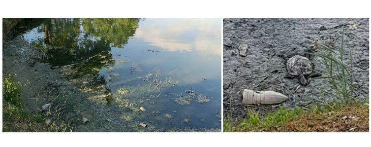 Cattivi odori, rifiuti e animali morti al laghetto Mariver di Osteria Grande