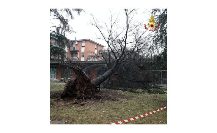 Il maltempo non risparmia il circondario imolese e Ozzano: nel pomeriggio grandine, vento forte e alberi caduti