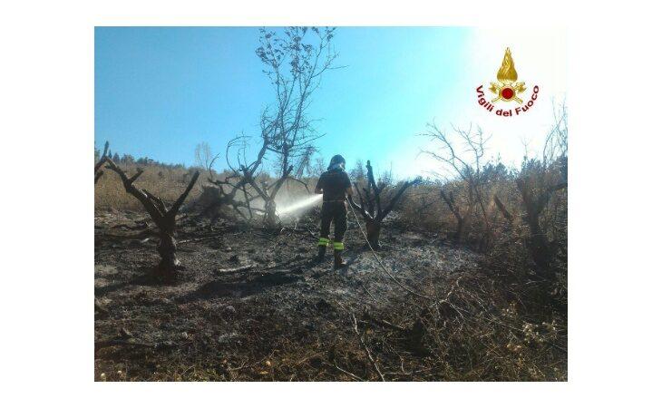 A fuoco un ettaro di campo agricolo a Borgo Tossignano