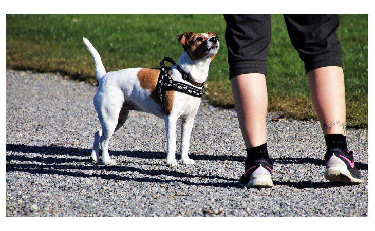 Camminata con il proprio cane a Borgo Tossignano, un pomeriggio a 6 zampe alla Casa del Fiume