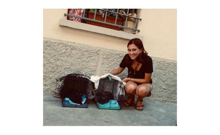 Incendio a Casalfiumanese, l'associazione AmiciMici Valsanterno recupera i gattini nell'appartamento