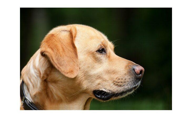 Stasera al Centro sociale «La Stalla» la seconda edizione dell'esposizione canina «Senti chi abbaia»