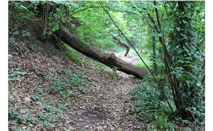 Escursione gratuita «Voci e natura nella notte»  al Bosco della Frattona