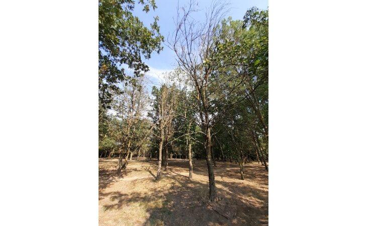 Nel bosco dei bambini di via Suore si abbattono gli alberi secchi e malati