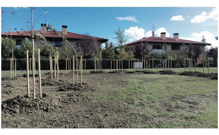 A Medicina un albero per ogni vittima del Covid, cerimonia con il presidente Bonaccini