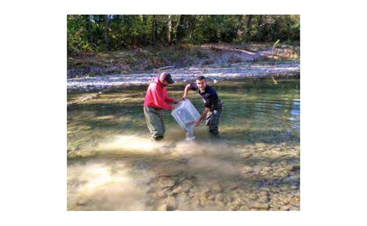 Perché i pesci sono solo in certe zone del fiume Santerno?