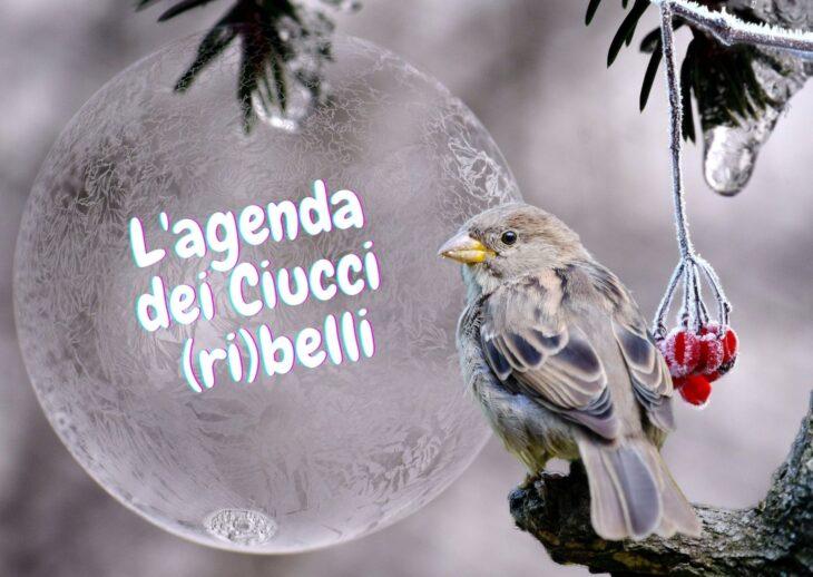 L'agenda dei Ciucci (ri)belli: 1-7 febbraio 2021
